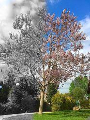 עץ חצי חצי - עיצוב של דנה